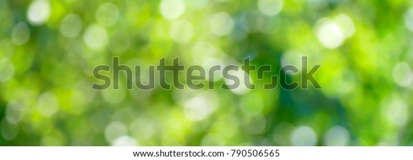 Green blurred background and sun rays.