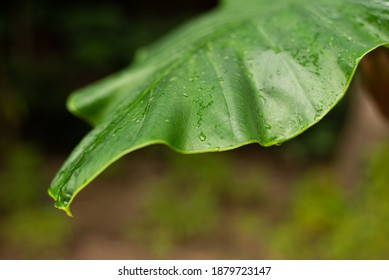Green boke and leaf texture with nature background. Abstract leaves surface of natural concept