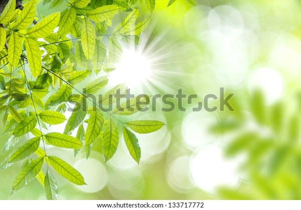Green bokeh abtract light background