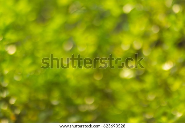 green bokeh background with circles. Summer abstract theme.