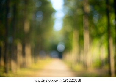 Green bokeh background from nature forest out of focus.Blured,design element. Defocused natural green tree background with sun beams.