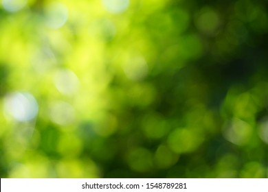 Green bokeh background from nature light