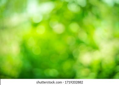 green bokeh background, nature and light blur bokeh, Abstract green bokeh