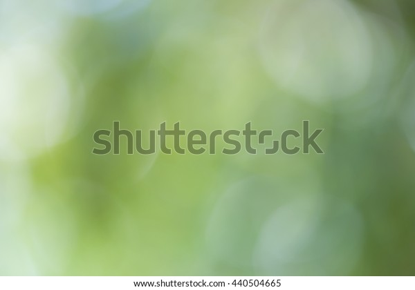 green bokeh background,green nature background on tree