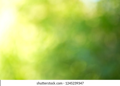 green bokeh background,nature background