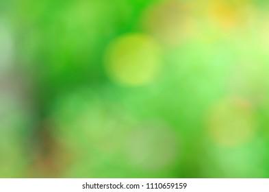 Green bokeh lights with flower in the graden