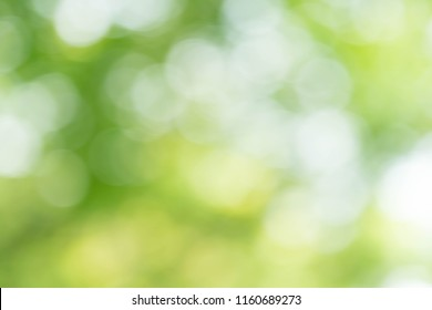 Green bokeh nature abstract background
