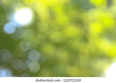 Green bokeh nature background.
