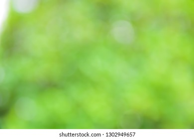 green bokeh for nature background abstract soft and blur focus