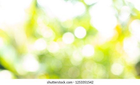Green bokeh on nature defocus art abstract blur background