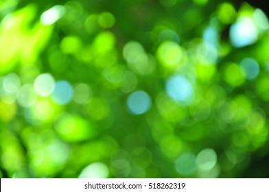 Green bokeh of the tree.