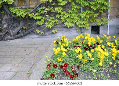 Green botanic garden with flowers