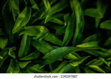 green bouquet of leaves