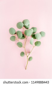 green branch eucalyptus populus on pink background. flat lay, top view