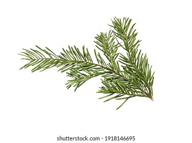 Green branch of fir tree isolated on white background. Christmas tree branch.