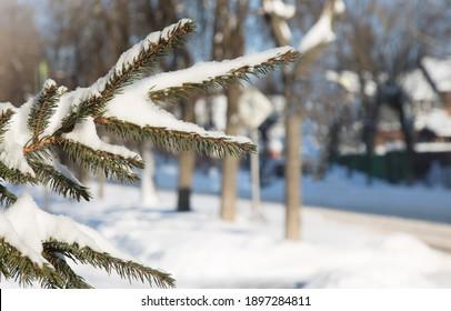 green-branch-fir-tree-snow-260nw-1897284