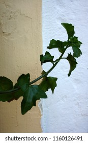 Green branch on the pale yelllow and white textured wall