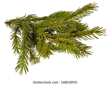 green branch tree on white background