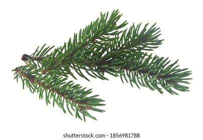 Green branches of a Christmas tree isolated on a white background close-up.