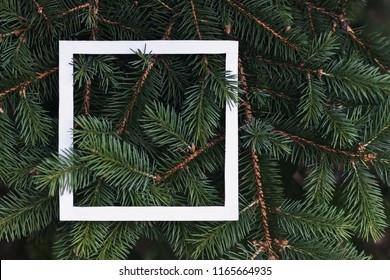 Green branches of coniferous tree background with concept design white frame border