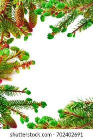 Green branches of a fir-tree isolated on a white background. Frame.