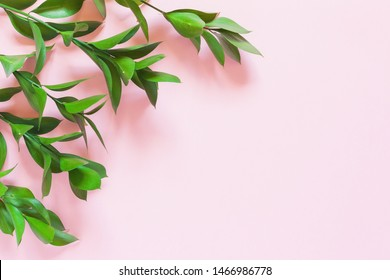 Green branches of ruscus on pink background.