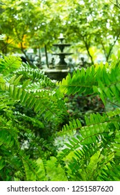 Green branches of tree with blurry fountain multi-tiered decoration behind.