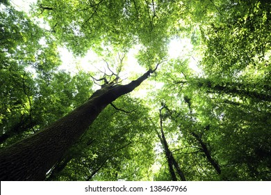 Green branches in a wood