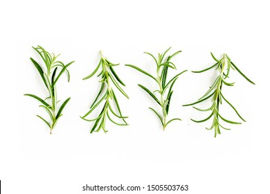 Green branchs and leaves of rosemary isolated on a white background. Мedicinal herbs. Flat lay. Top view