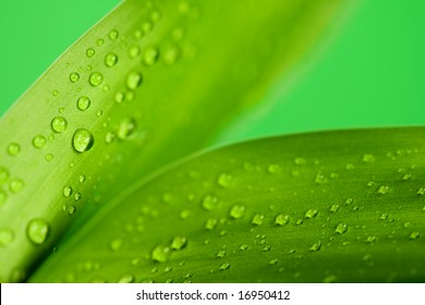 Green bright of a bamboo plant with drops