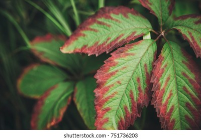 green bright leaves.nature background.outdoor view