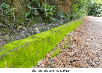 Green bright moss on the roadside in sunny day