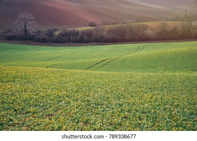Green and brown fields