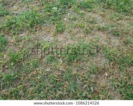 green and brown grass lawn with a lot of pollen