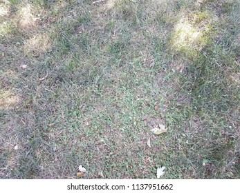 green and brown grass with weeds