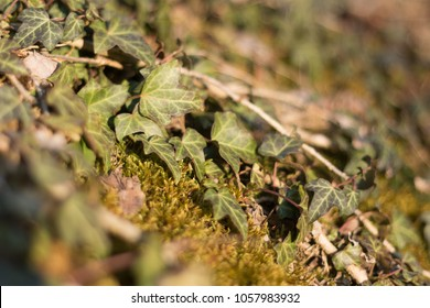 green and brown ivy plant on yellow moss in forest