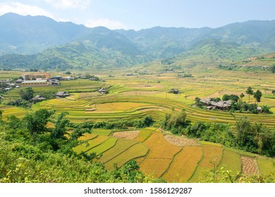 Green, brown, yellow and golden rice terrace fields of Tu Le valley, Northwest of Vietnam