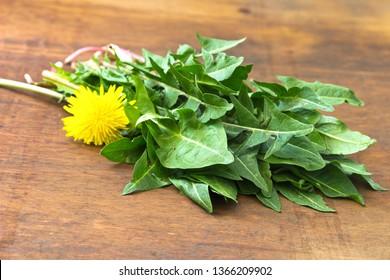 A green bundle of dandelion greens