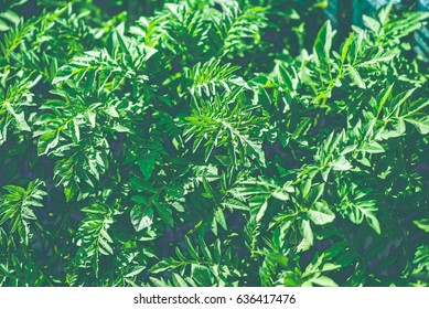 green bush background close up, landscape design texture retro style