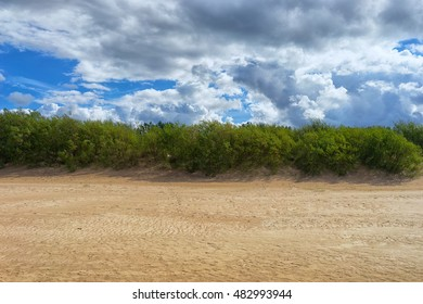 Green bush between the blue sky with clouds and yellow sand dunes of the Baltic Sea