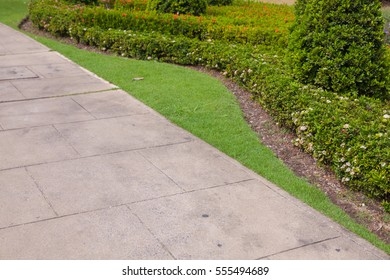 green bush in the park