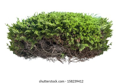 Green bush with roots isolated on white background