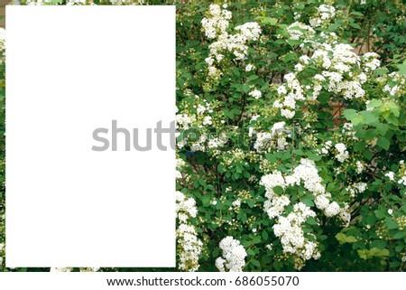 Green bush white flowers stock photo edit now 686055070 shutterstock green bush with white flowers mightylinksfo