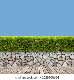 Green bush or  and wooden floor on a clear blue sky background. Green bush or wall of shrubs wall in the park