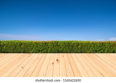 Green bush or and wooden floor on a blue sky background.