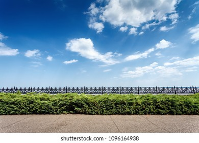 Green bushes and asphalt road. Blue sky above a hedge, side view. Landscape in summer day