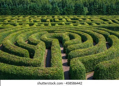 Green bushes circular labyrinth, hedge maze. Top view.