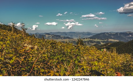 Green bushes and cloudy blue sky on background.Beautiful mountain landscape in autumn.Instagram vintage film filter with fading film color