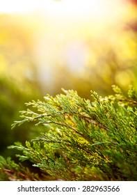 Green bushes in garden in sunset