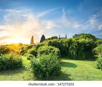 Green bushes in Vorontsov garden in sunny day
